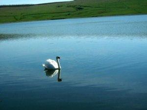 Lacul Sucutard 1