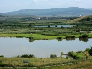 Agropisc Balta 1