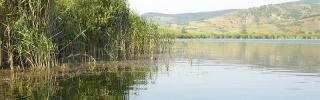 Lacul Stiucilor cover